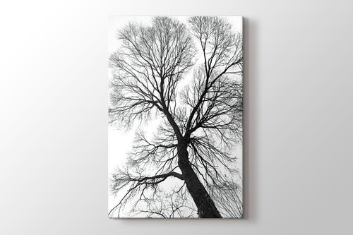 Ağaç Perspektif görseli.