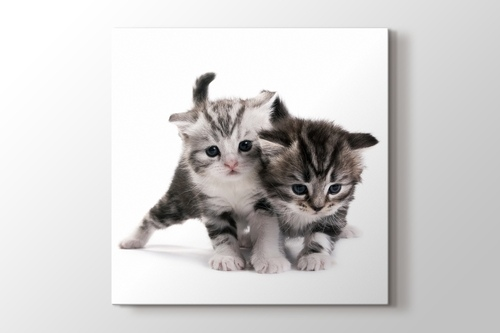 Pussy Cats görseli.