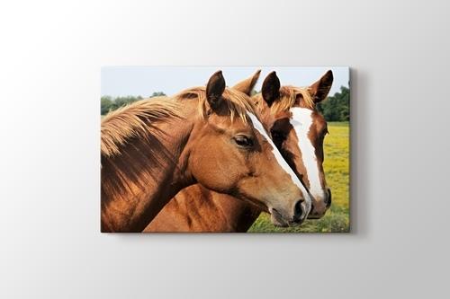 Horses görseli.