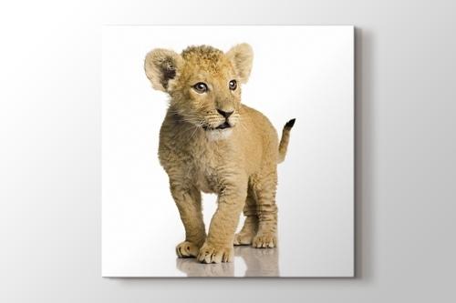 Beware of the Lion görseli.