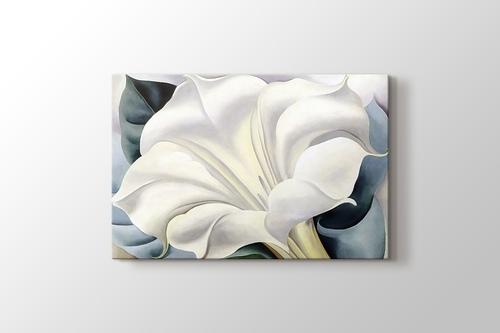 White Trumpet Flower görseli.