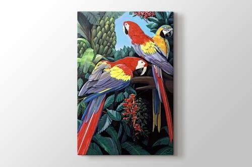 Parrots görseli.