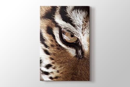 Eye of the Tiger görseli.