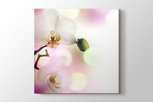 Orkide görseli.