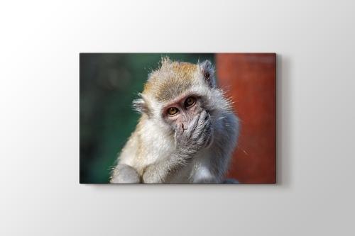 Malezia - Monkey görseli.
