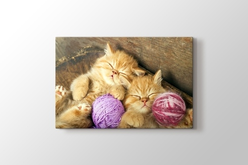 Kedi Yavruları görseli.