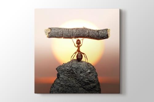 Karınca Çalışması görseli.
