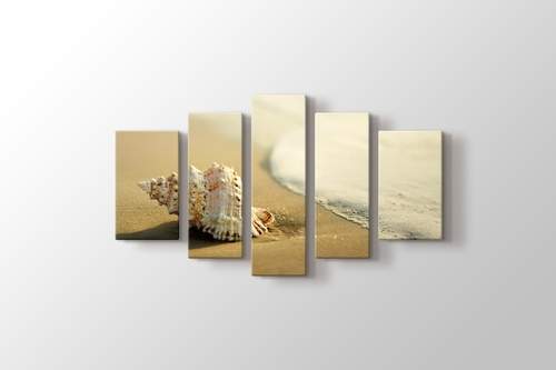 Seashell on the Beach görseli.