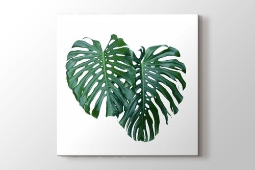 Monstera Leaves görseli.