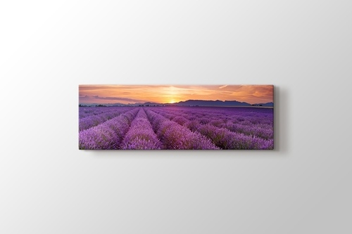 Lavender Field Panorama görseli.