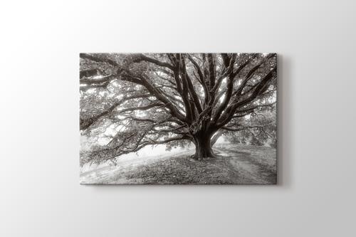 Dev Ağaç görseli.