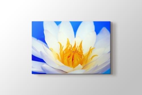 Nilüfer Çiçeği görseli.