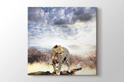 Leopard görseli.