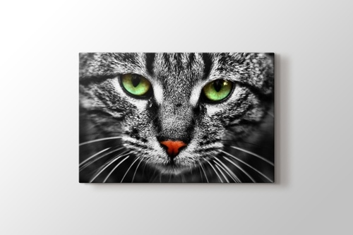 Cat Eyes görseli.