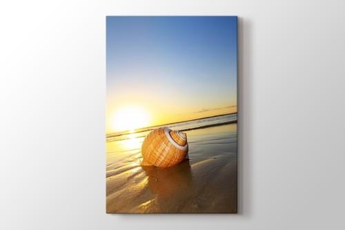 Sea Shell on Sand görseli.