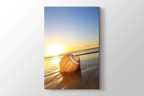 Sea Shells görseli.
