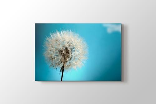 Karahindiba Çiçeği görseli.