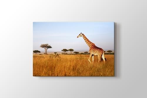 Giraffe görseli.