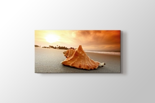 Sea Shells on Sand görseli.