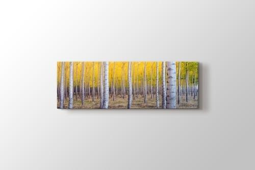 Huş Ağacı Ormanı görseli.