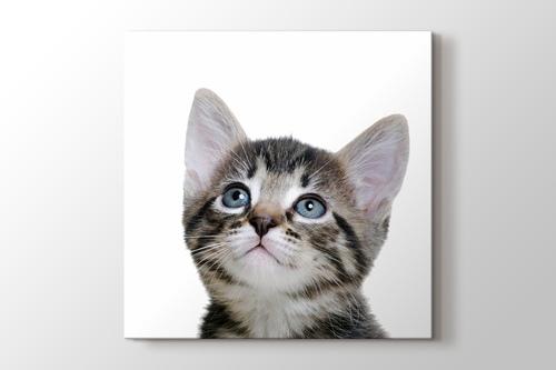 Blue Eyed Tabby Cat görseli.