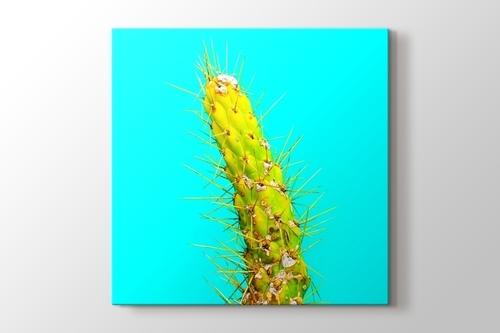 Cactus görseli.
