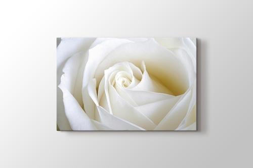 White Rose Close Up görseli.