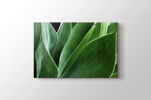 Succulent Leaves görseli.