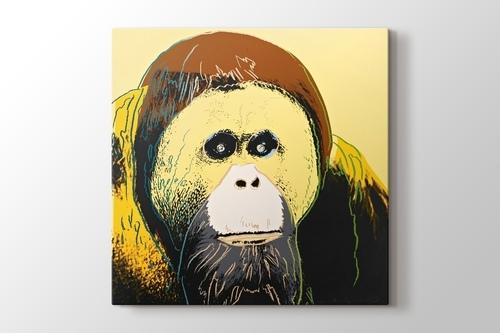 Orangutan görseli.
