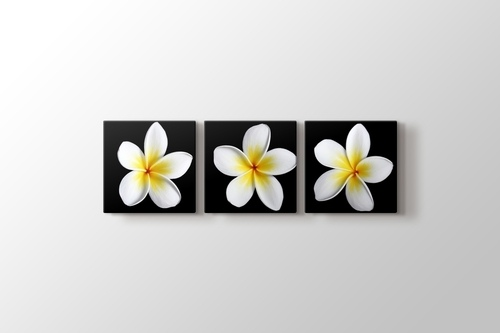 Frangipanies Çiçekleri görseli.