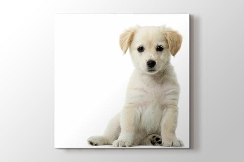 Puppy Dog - Golden Retriever görseli.