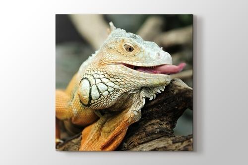Iguana görseli.