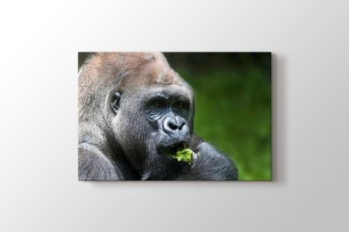 Gorilla görseli.