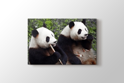 Eating Pandas görseli.