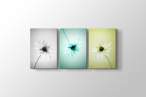 Three Daisy görseli.