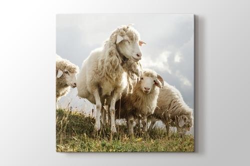 Koyunlar görseli.
