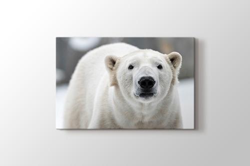Polar Bear görseli.