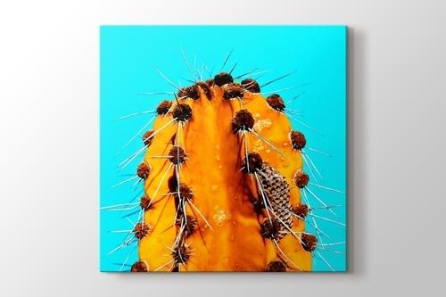 Turuncu Kaktüs görseli.
