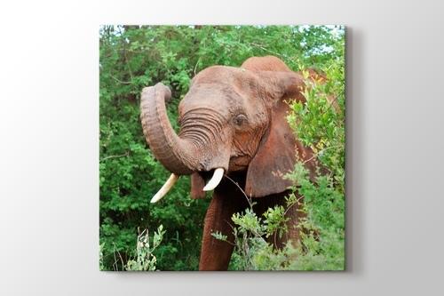 Elephant görseli.
