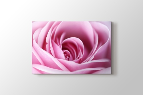 CloseUp Pink Rose görseli.