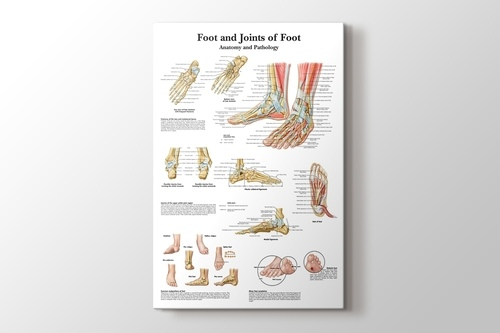 Foot and Joints of Foot Chart Anatomy and Pathology görseli.
