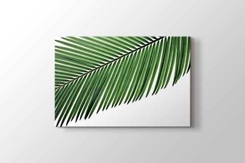 Palmiye Yaprağı görseli.