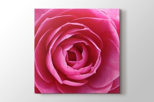 Pink Rose görseli.
