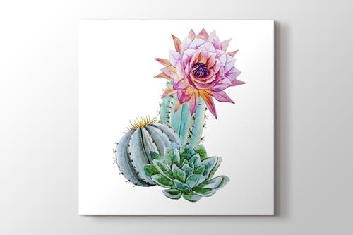 Beautful Cactus görseli.