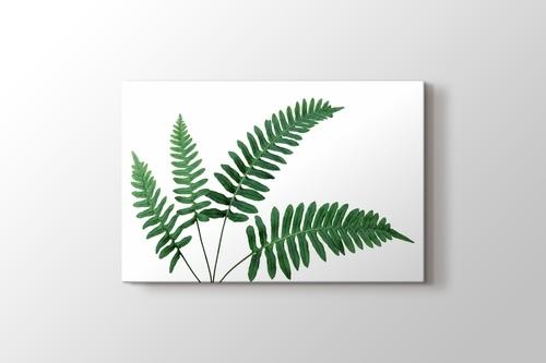 Fern Leaves görseli.