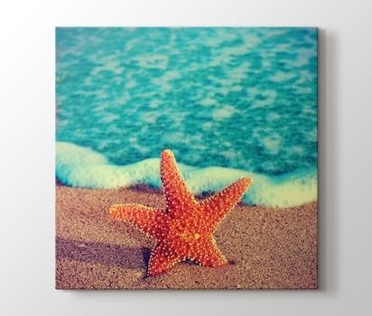 Deniz Yıldızı Kanvas Tablo Burada Pluscanvas