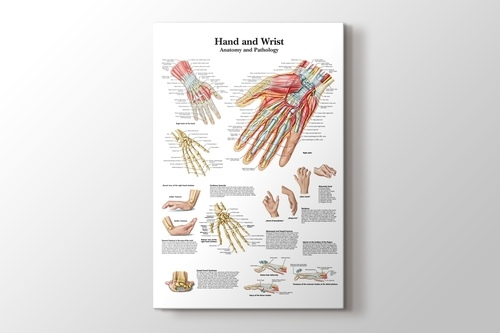 Hand and Wrist Chart Anatomy and Pathology görseli.
