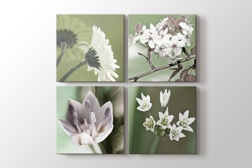 Quattro Flowers görseli.