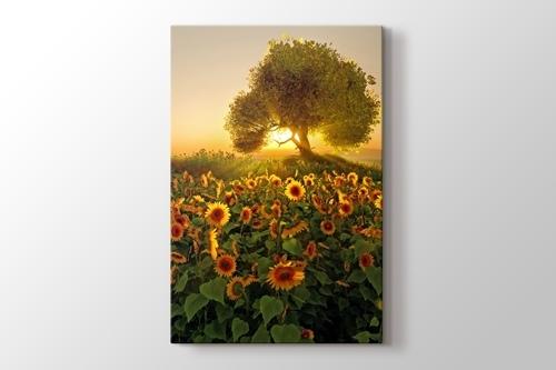 Sunflower görseli.