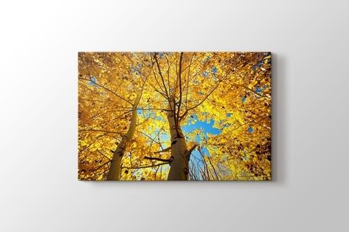 Sonbahar Ağaçları görseli.